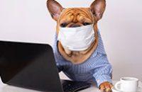 Revista-dermatologia-veterinaria-em-Foco-vol06-rede-social-veterinario